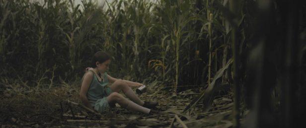 wild-04-ida-corn-sit-1024x429