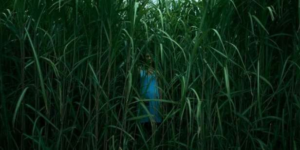 In The Tall Grass (Natali, 2019)